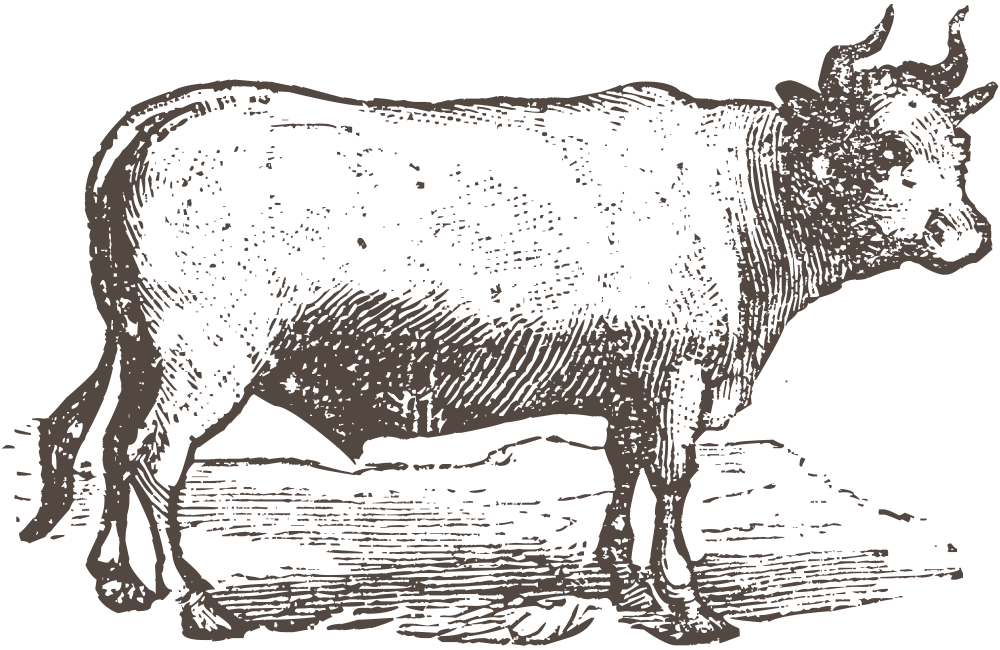 Cow-old-cut-brown